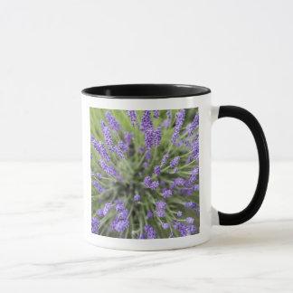 Lavender plants mug