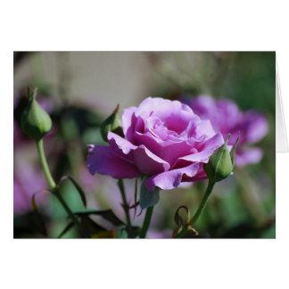 Lavender Rose Card