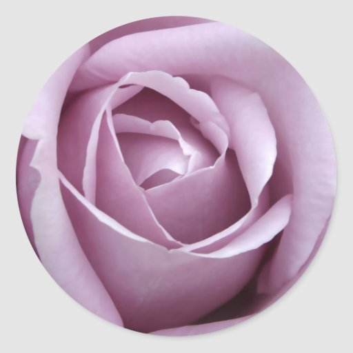 Lavender Rose Flower Round Sticker