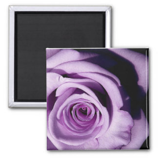 Lavender rose fridge magnet