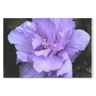 Lavender Rose of Sharon Tissue Paper