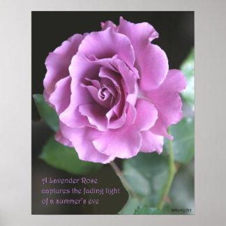 Lavender Rose Poster: ROSE & PROSE 16x20 Poster