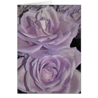 Lavender Roses collection Greeting Card