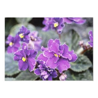 Lavender Saintpaulia 'Mr. Chips' (African Violet) 13 Cm X 18 Cm Invitation Card