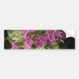 Lavender Saintpaulia 'Purple Choice' (African Viol Bumper Sticker