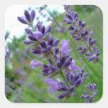 Lavender Square Sticker