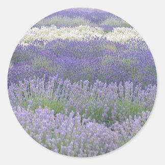 Lavender Sticker