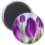 Lavender Tulips Magnet