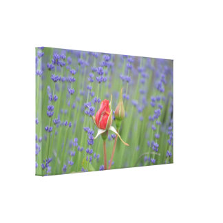 Lavender with Roses Gallery Wrapped Canvas