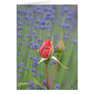 Lavender with Roses Greeting Card