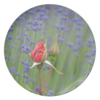 Lavender with Roses Party Plates