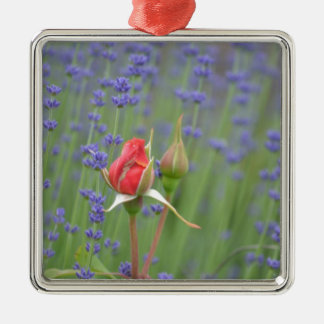 Lavender with Roses Silver-Colored Square Decoration