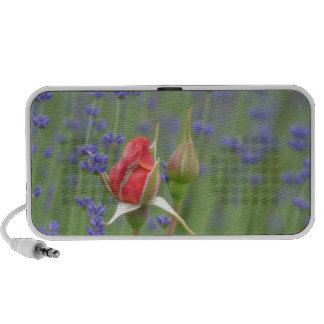 Lavender with Roses iPod Speakers