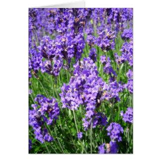 Lavenders - Card