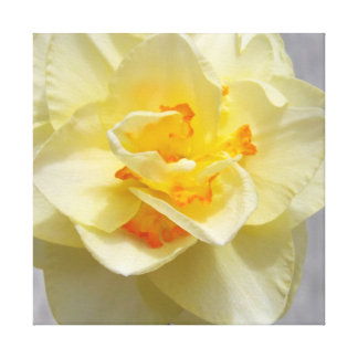 Layered Daffodil Stretched Canvas Print