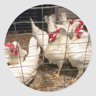 Layers (Hens And Chickens) Classic Round Sticker