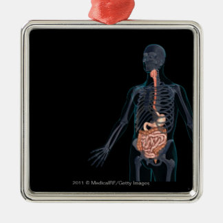 Layout of the human digestive system christmas ornament
