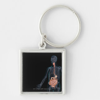 Layout of the human digestive system key ring