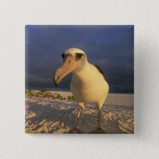 Laysan Albatross, Diomedea immutabilis), 15 Cm Square Badge