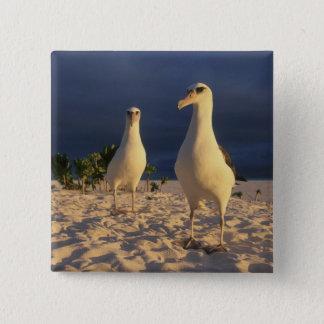 Laysan Albatross, Diomedea immutabilis), 2 15 Cm Square Badge