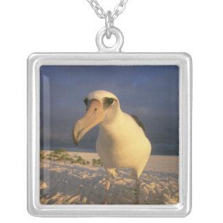 Laysan Albatross, Diomedea immutabilis), Silver Plated Necklace