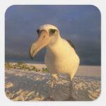 Laysan Albatross, Diomedea immutabilis), Sticker