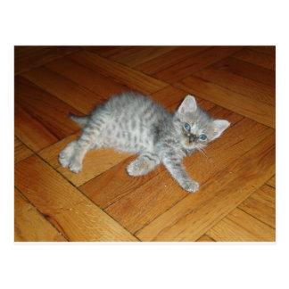 Lazy Cat Post Card