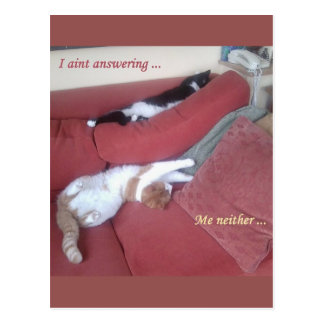 Lazy Cats Fun Postcard - Catnap
