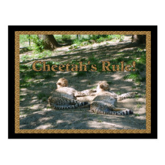 Lazy Cheetahs Postcard