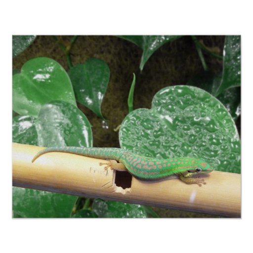 Lazy Day Gecko Poster