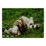 Lazy Day Tiger Blank Card
