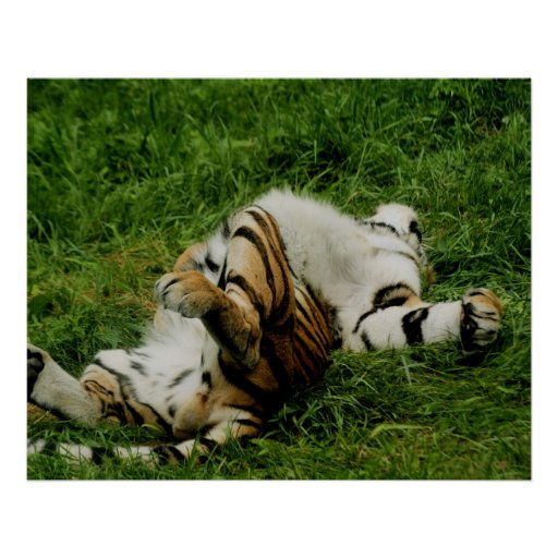 Lazy Day Tiger Poster
