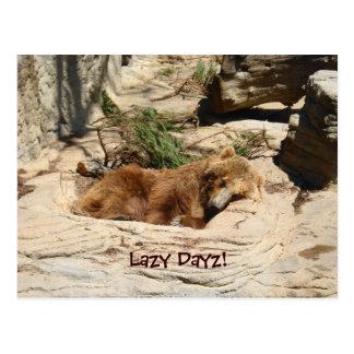 Lazy Dayz Bear Postcard