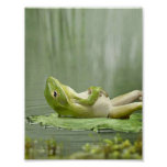 Lazy Frog Poster