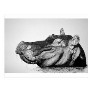 Lazy Hippo Postcard