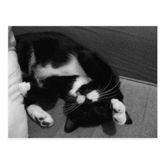 Lazy Kitten Postcard