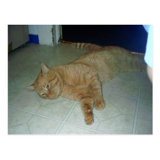 Lazy Kitty Postcard