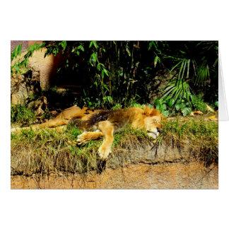 Lazy lion card