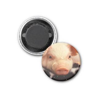 Lazy Piglet Magnet