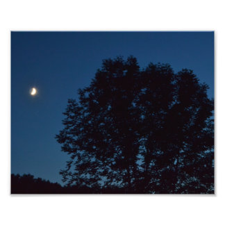 """""""LAZY SEPTEMBER MOON WATCHING OVER TREES"""" PHOTOGRAPHIC PRINT"""