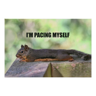 Lazy Squirrel Photo Poster