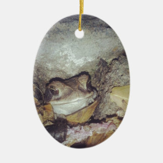 Le Toad Nighttime Nature Photography Ceramic Oval Decoration