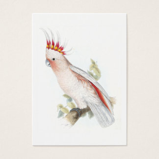 Leadbeater's Cockatoo by Edward Lear Business Card