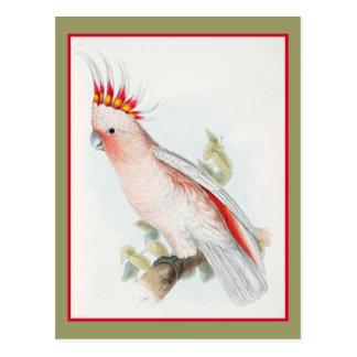 Leadbeatter Cockatoo Postcard