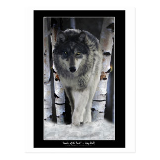 LEADER OF THE PACK Wolf Postcards