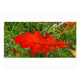 Leaf alone postcard