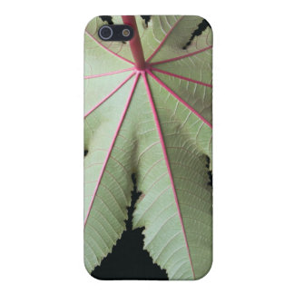 Leaf and Stem iPhone 5/5S Cover