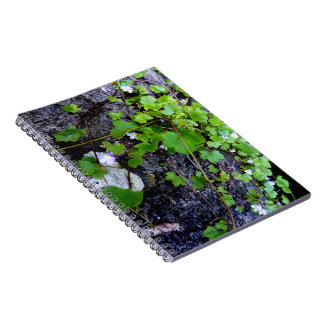 Leaf and Stone Notebook