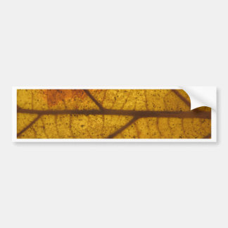 Leaf Bumper Sticker