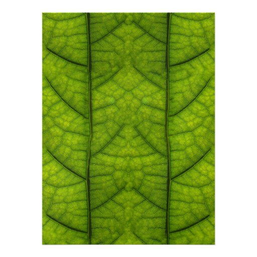 Leaf Closeup Vein Lines Photo Pattern Announcement